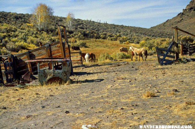 Wild horses near High Rock Canyon