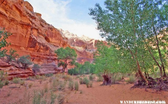 Horseshoe Canyon is a shady hike from the BLM Camp