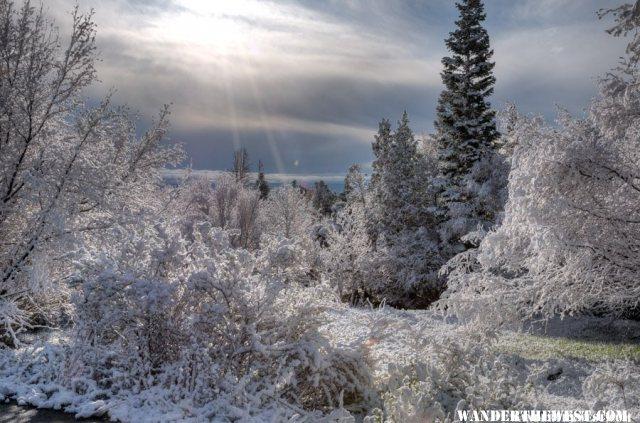Snowy Morning I