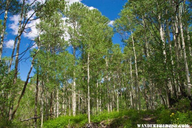 Alta Toquima Wilderness Aspens