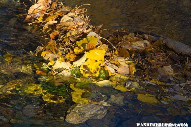 Leaves in Leavitt Creek