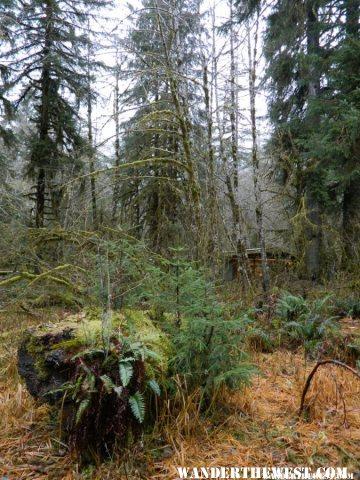 Seedlings on a fallen log.