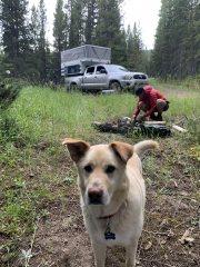 Camper In MT