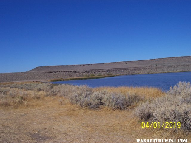 Catnip Res. Sheldon NWR, Nevada(04/07/2020)